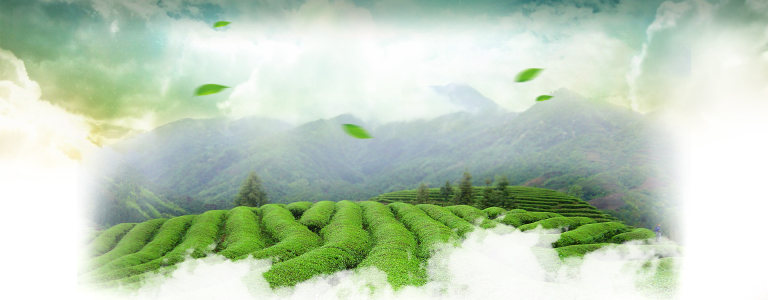 茶叶春天首页海报高清背景图片素材下载