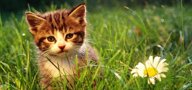 草地上的小猫