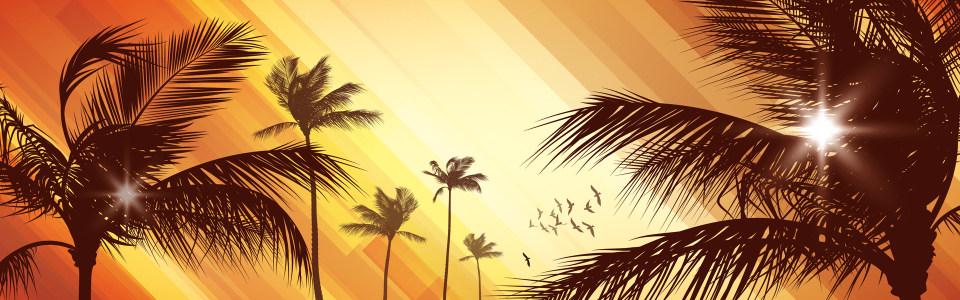 精美棕榈树banne背景高清背景图片素材下载