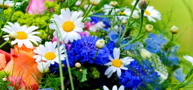 鲜花 花朵 植物 背景