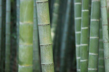 竹子高清背景高清背景图片素材下载
