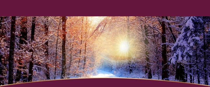冬天雪松背景