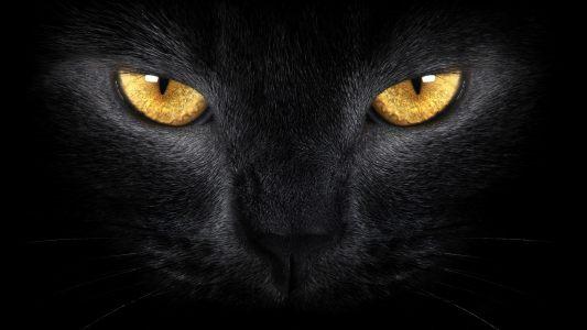黑猫猫眼高清背景图片素材下载