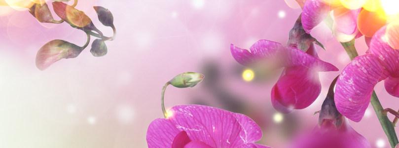 香水紫色花卉背景banner