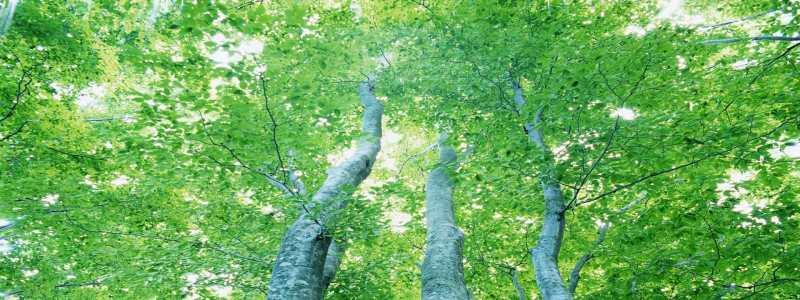 森林banner高清背景图片素材下载
