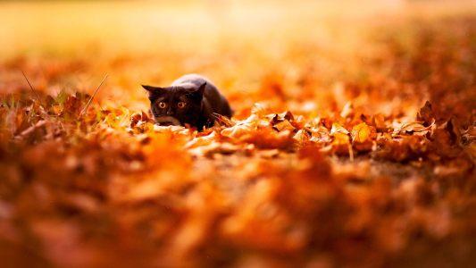 秋天落叶背景高清背景图片素材下载