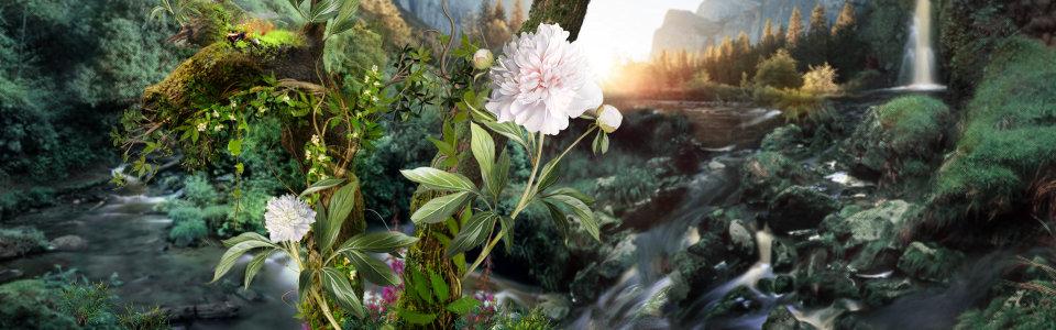 林间植物背景高清背景图片素材下载