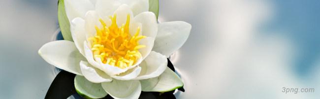 花朵背景背景高清大图-花朵背景底纹/肌理