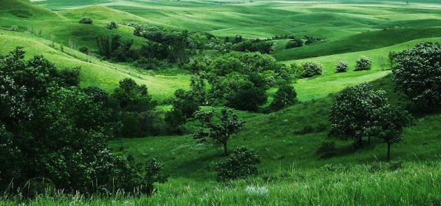树林草地背景