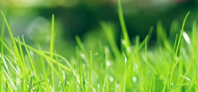 绿色草地背景高清背景图片素材下载