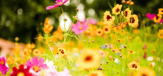 彩色鲜花背景