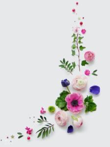植物摆拍背景高清背景图片素材下载