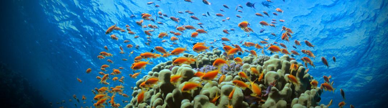 海底世界炫彩拍摄高清壁纸