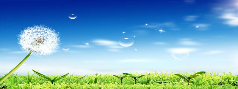 草地上的蒲公英背景