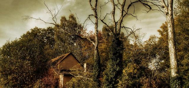 树林房子背景