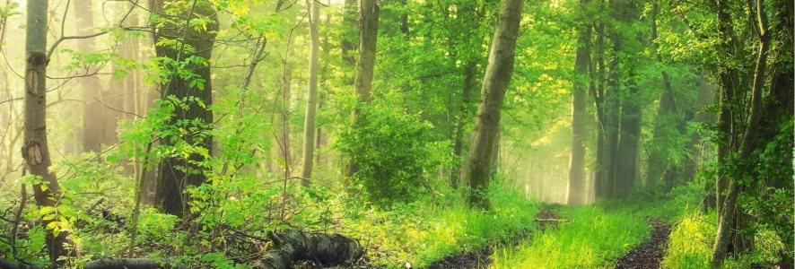 高清树林森林背景