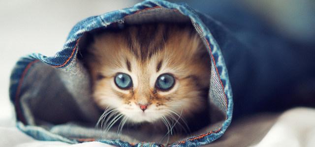 衣服里的小猫