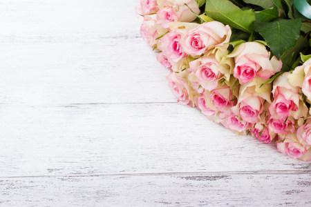粉色玫瑰花背景