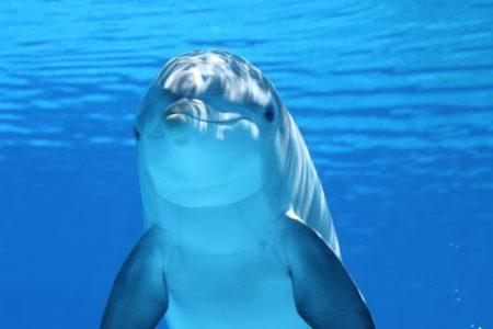 海豚高清背景图片素材下载