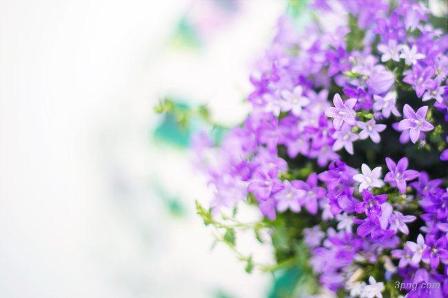 紫色的花背景高清大图-紫色背景底纹/肌理