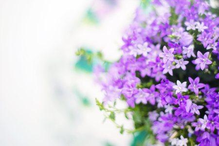 紫色的花高清背景图片素材下载