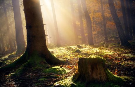 唯美森林树林