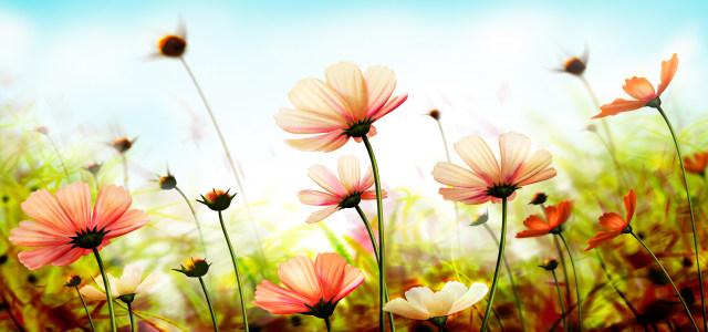 美丽大自然鲜花背景