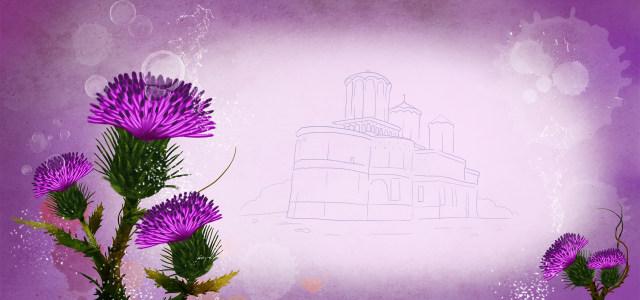 紫色郁金香背景