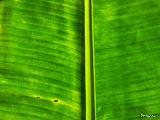 树叶背景背景高清大图-树叶背景自然/风光
