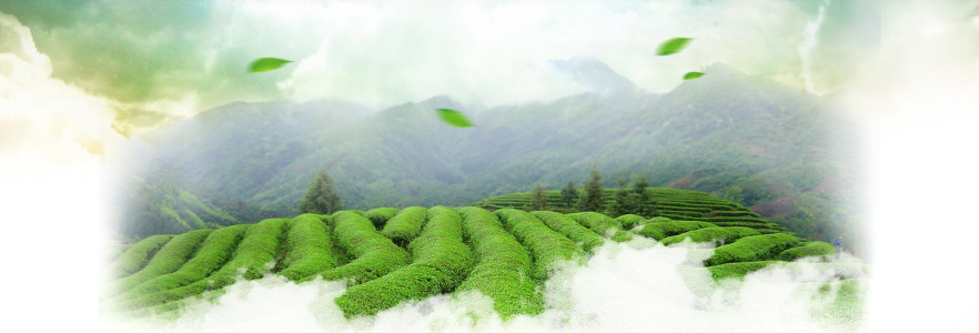 绿色创意海报背景
