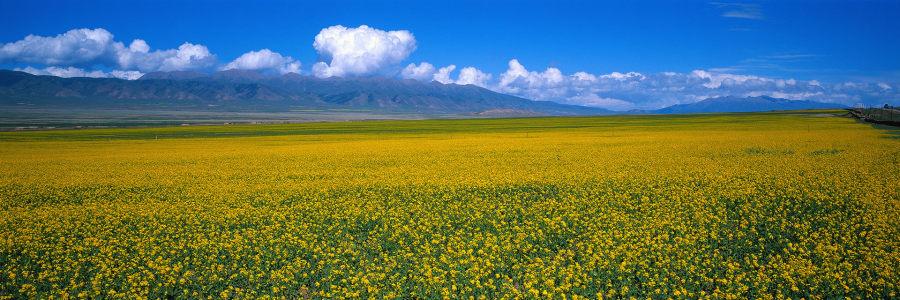 蓝天黄色小花海报