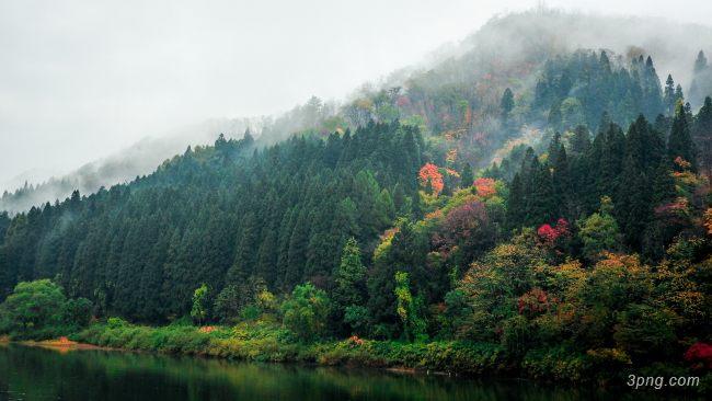 树林高清背景背景高清大图-高清背景自然/风光