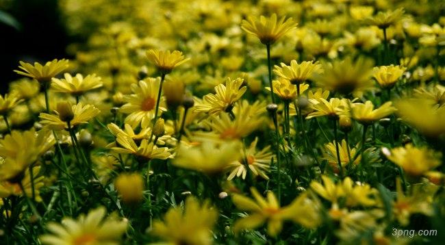 花高清背景背景高清大图-高清背景鲜花
