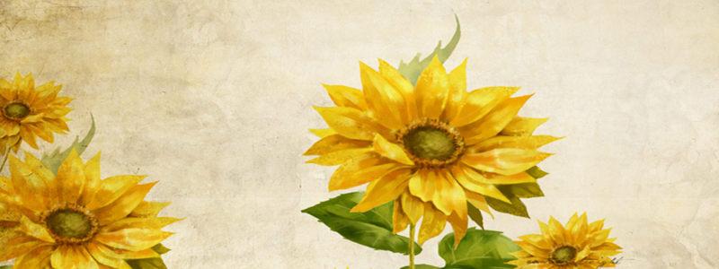 怀旧向日葵背景