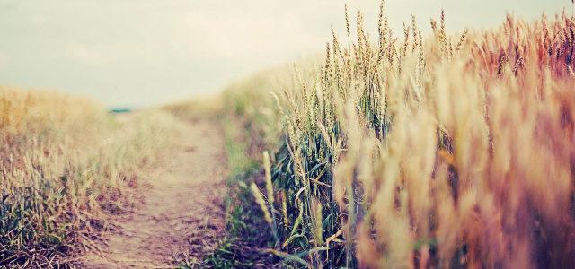 乡村自然风光背景高清背景图片素材下载