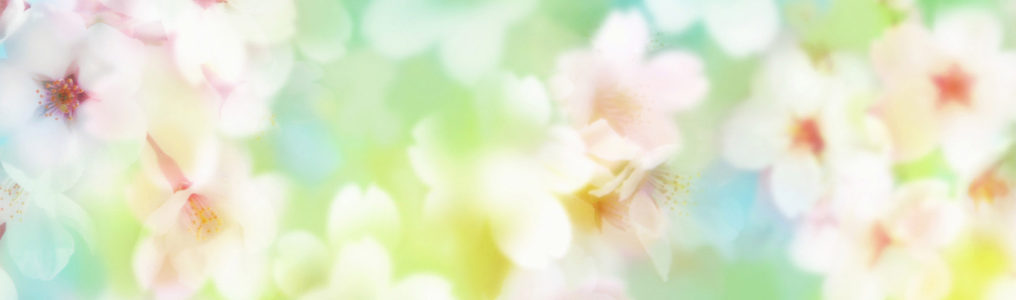 虚化花瓣淘宝女装banner壁纸高清背景图片素材下载
