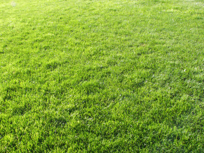 草地背景高清背景图片素材下载