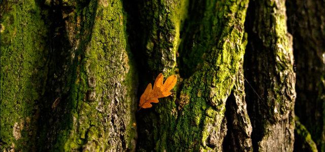 高清树杆摄影高清背景图片素材下载