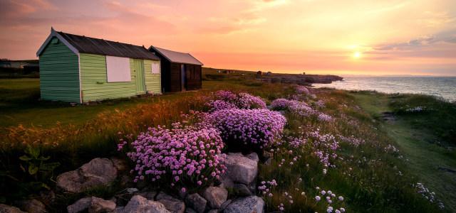海边山坡上的花朵房子高清背景图片素材下载