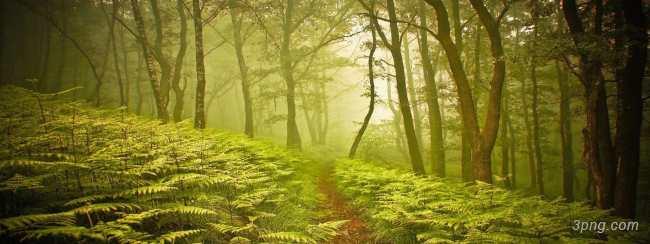森林banner背景高清大图-森林背景Banner海报