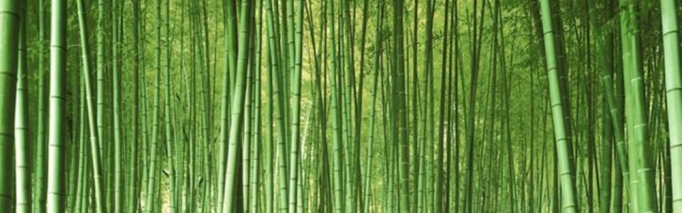 大气竹林风景淘宝海报背景