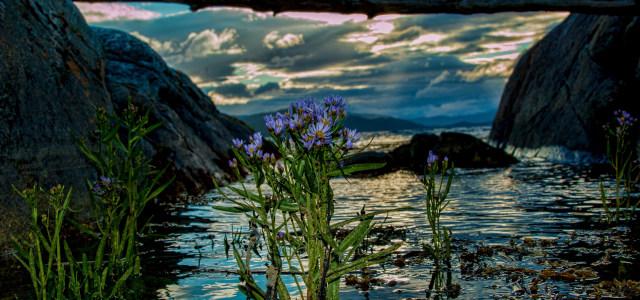 河流鲜花山峰背景