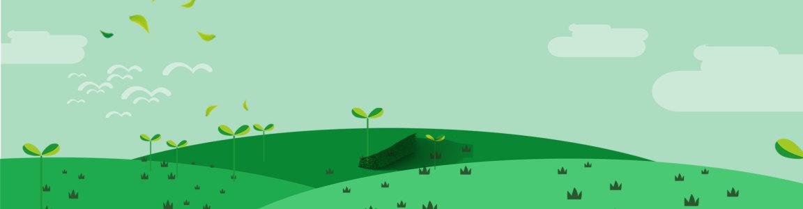 发芽的小树