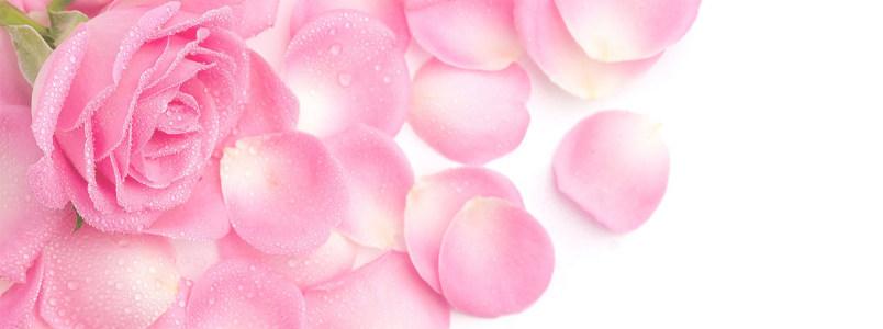 香水粉色玫瑰背景banner