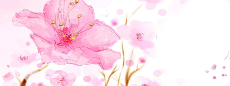 粉红花朵背景高清背景图片素材下载