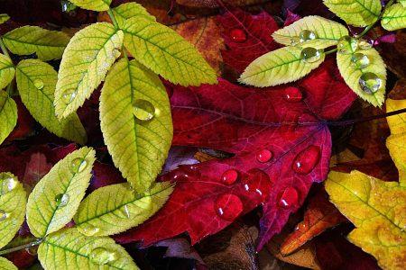 叶子背景高清背景图片素材下载