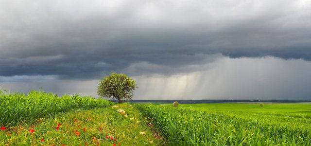 乌云下的草原