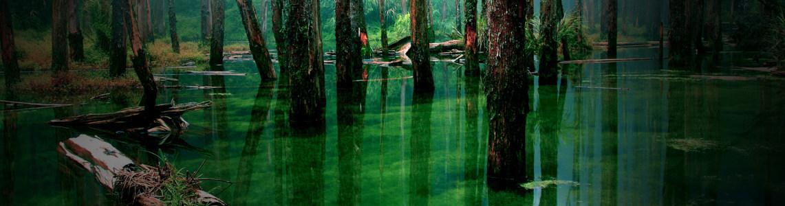 唯美个性森林banner
