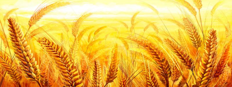 金色麦田背景海报高清背景图片素材下载