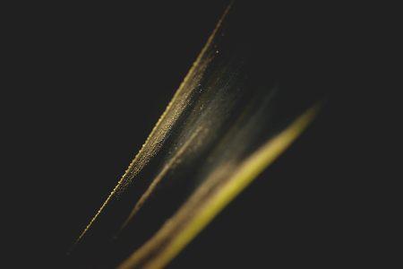 金色的叶子纹理底纹高清背景图片素材下载